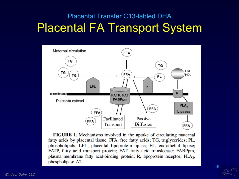 DHA gets Special Treatment by Placenta