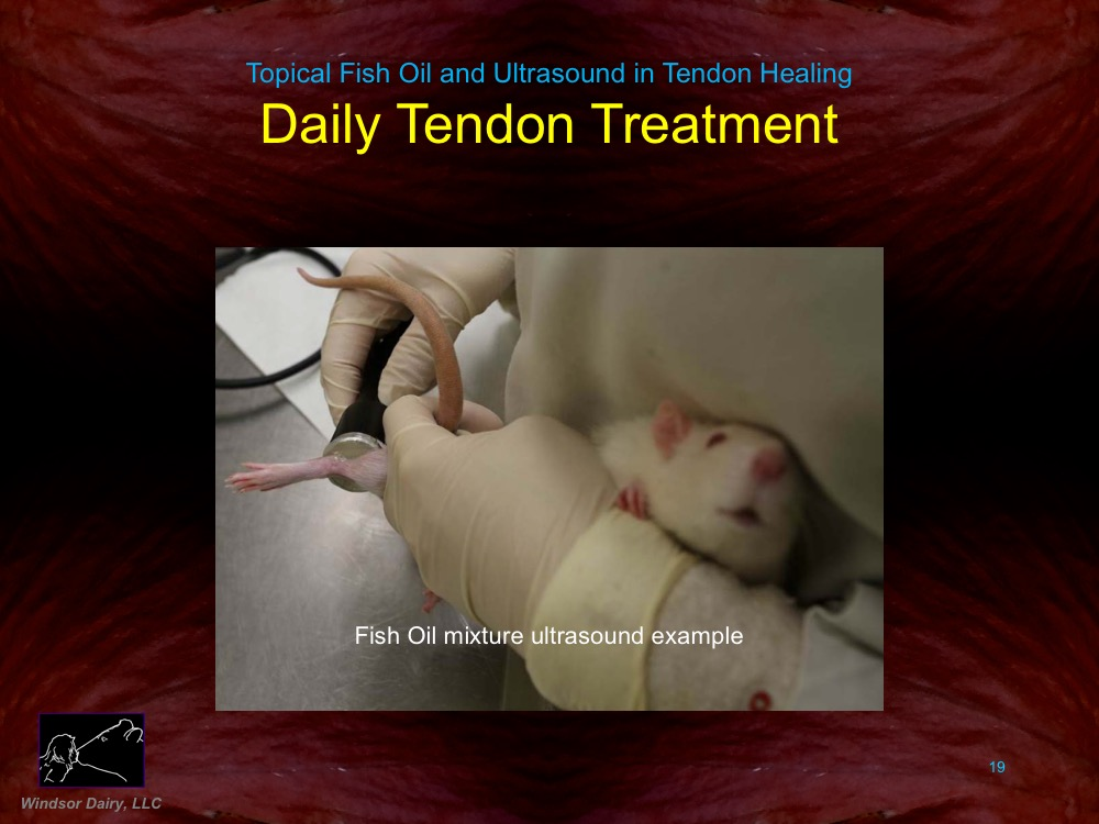 Topical Fish Oil and Ultrasound Assist Tendon Healing: Rat Study shows how various healing therapies compare